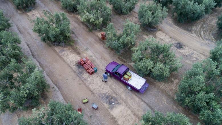 Έως τις 26 Οκτωβρίου η πληρωμή της βασικής ενίσχυσης στους αγρότες