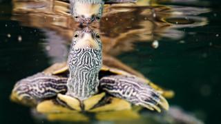 Περισσότερες από τις μισές χελώνες παγκοσμίως έχουν φάει πλαστικό