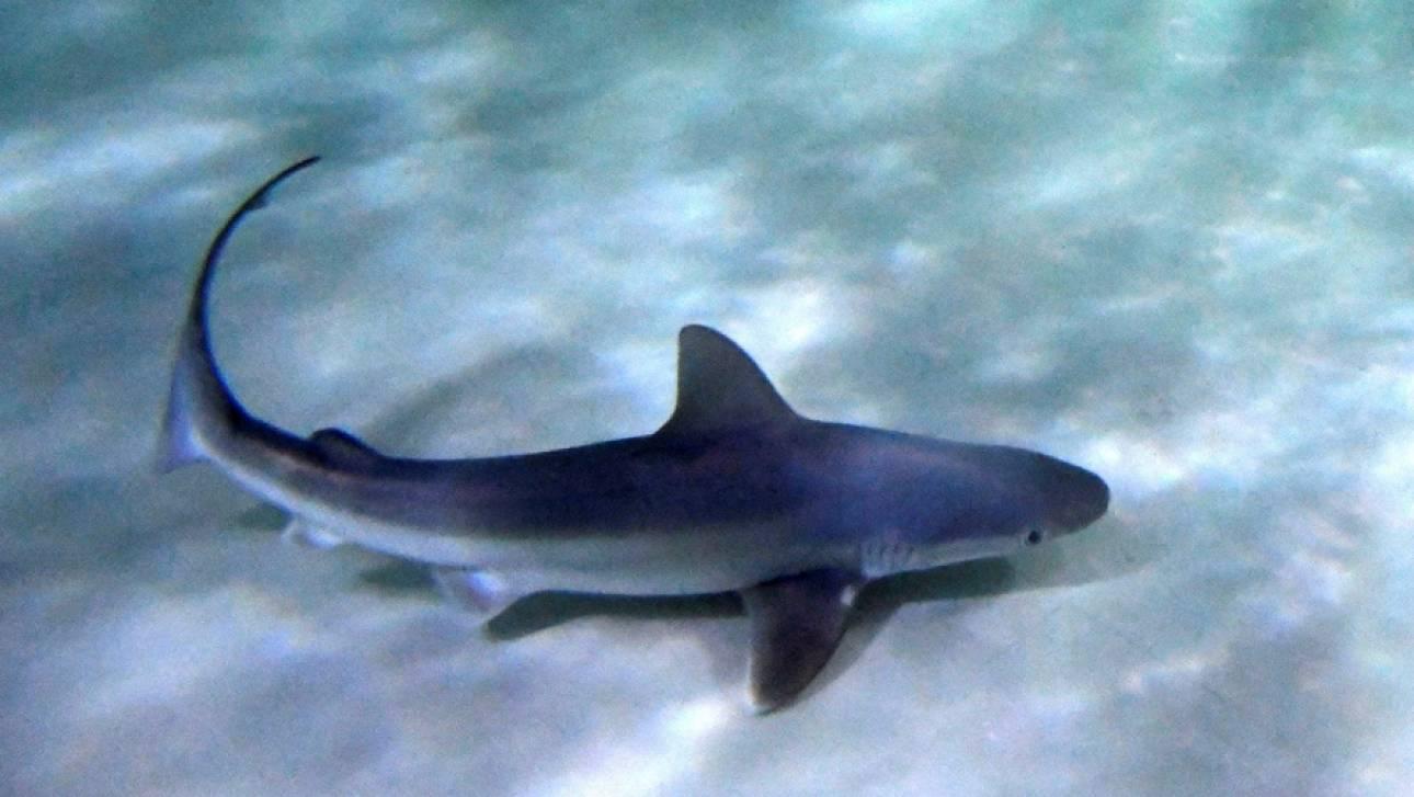 ΗΠΑ: Καρχαρίας σκότωσε άνδρα την ώρα που έκανε σερφ