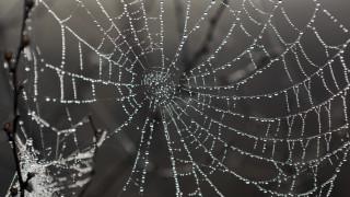Πέπλο αράχνης «κατάπιε» 300 μέτρα βλάστησης στο Αιτωλικό