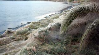 Λύθηκε το μυστήριο με το πέπλο αράχνης που «κατάπιε» βλάστηση στο Αιτωλικό (pics)