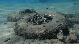 Κοράλλια που χρονολογούνται