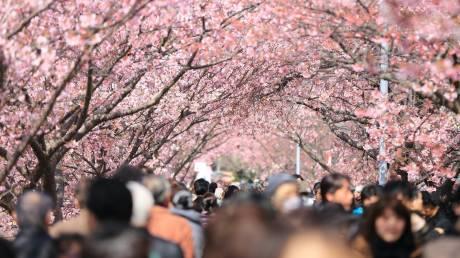 Kyoto: Εκεί όπου οι ανθισμένες κερασιές κλέβουν την παράσταση