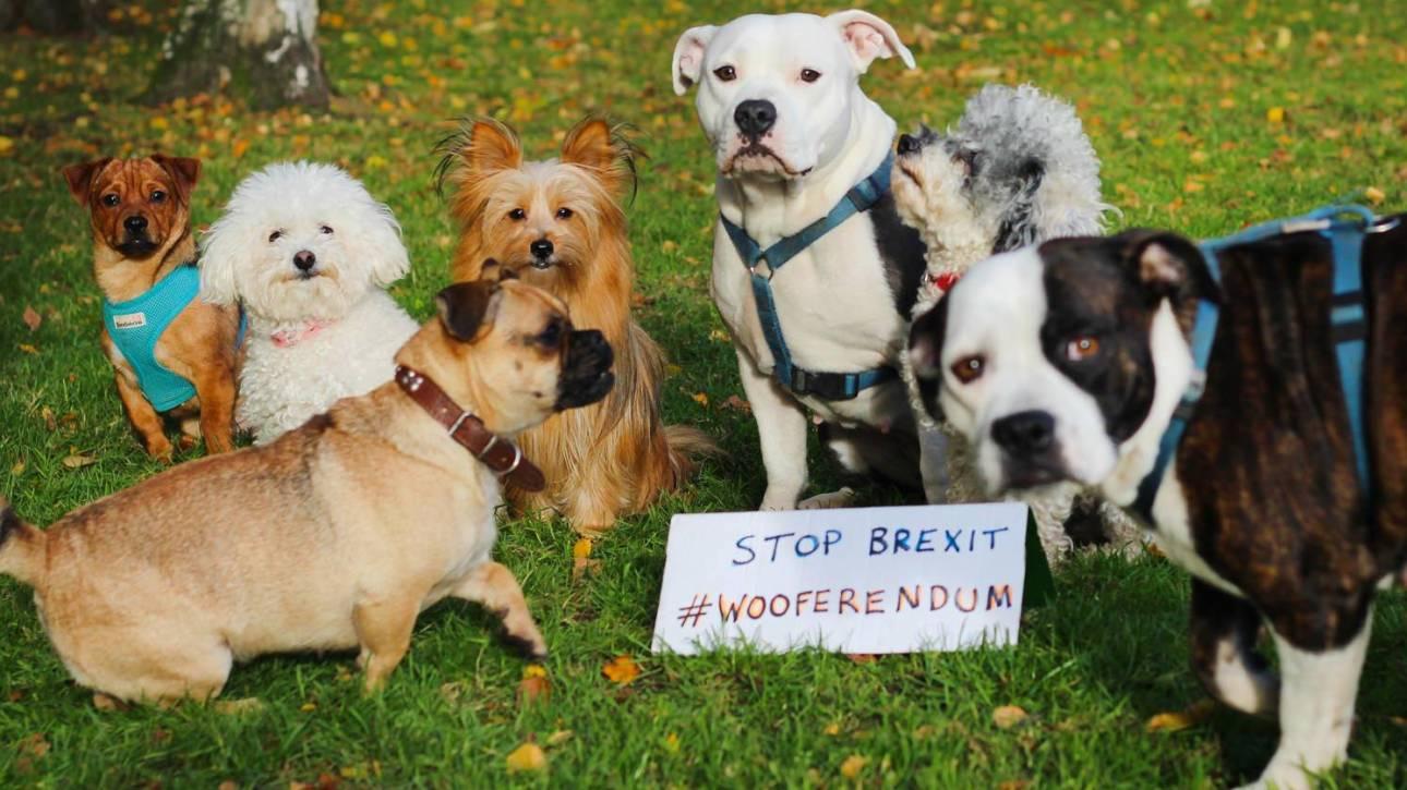 Brexit: κατοικίδια στην πρώτη πορεία διαμαρτυρίας τον Οκτώβριο στο Λονδίνο
