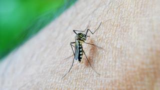 Πέντε νέοι θάνατοι από τον ιό του Δυτικού Νείλου