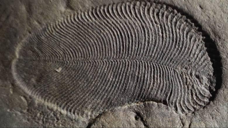 Ανακαλύφθηκαν ίχνη λίπους από το αρχαιότερο γνωστό ζώο που έζησε πριν από 558 εκατ. χρόνια