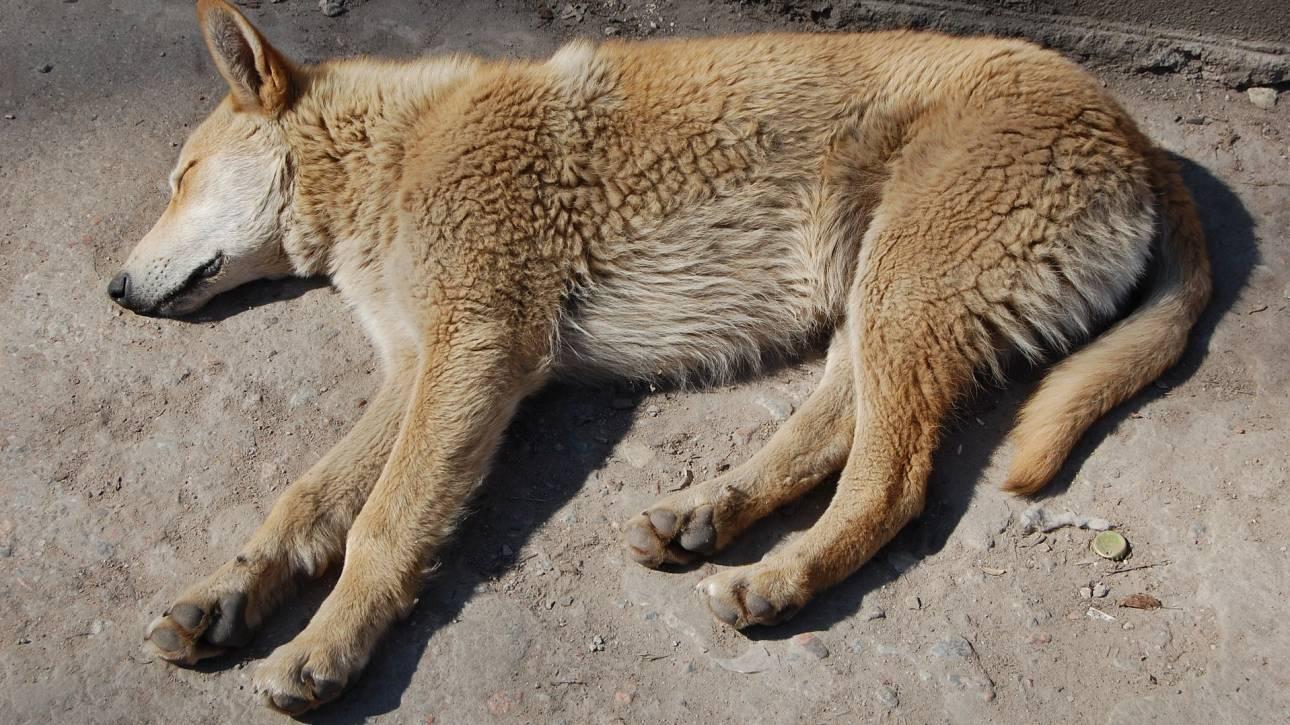 Σοβαρό περιστατικό κακοποίησης ζώων: Εγκλώβισαν σε φούρνο σκύλο με τα 9 μωρά του και έβαλαν φωτιά