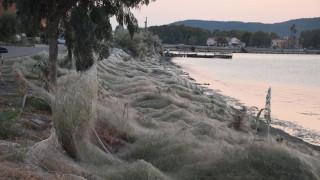 Ο πελώριος ιστός αράχνης που «κατάπιε» το Αιτωλικό εντυπωσιάζει το CNNi
