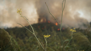 Φωτιά σε αγροτική έκταση στο Αγρίνιο (pics)