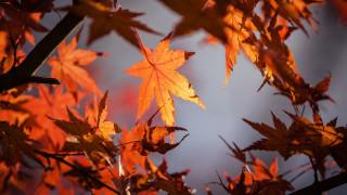 Φθινοπωρινή ισημερία: Πότε ξεκινά και επίσημα το φθινόπωρο