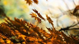 Φθινοπωρινή ισημερία: Σήμερα αρχίζει επίσημα το Φθινόπωρο