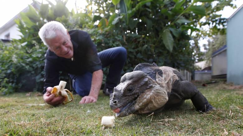 Κροκόδειλοι, φίδια, αράχνες: Οι... ασυνήθιστοι «συγκάτοικοι» ενός 67χρονου Γάλλου
