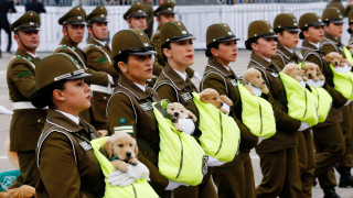 Τα κουτάβια που έκλεψαν την παράσταση στην στρατιωτική παρέλαση της Χιλής