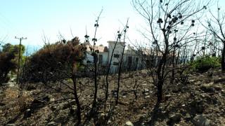 Πολιτικές αναταράξεις μετά το «φρένο» στην έρευνα για τη φονική πυρκαγιά στο Μάτι
