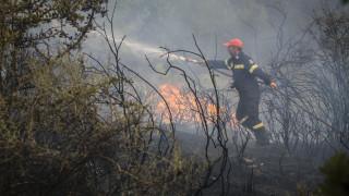 Πυρκαγιά στην περιοχή Σπιάτζα του Πύργου Ηλείας