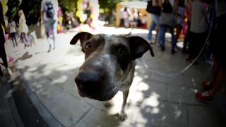 Παγκόσμια Ημέρα των Ζώων: Μία υπενθύμιση της αγάπης που δίνουν και της αγάπης που αξίζουν