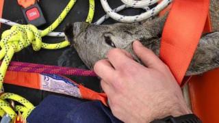 Παγκόσμια Ημέρα των Ζώων: Η συγκινητική ανάρτηση της Πυροσβεστικής