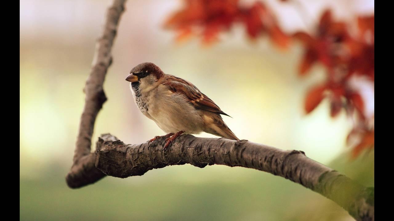 https://cdn.cnngreece.gr/media/news/2018/10/05/149524/photos/snapshot/sparrow-9950_1920.jpg