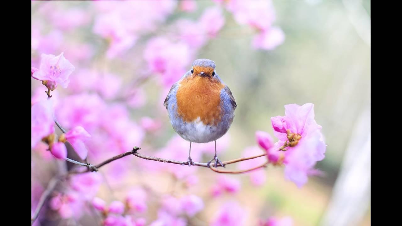 https://cdn.cnngreece.gr/media/news/2018/10/05/149524/photos/snapshot/spring-bird-2295436_1920.jpg