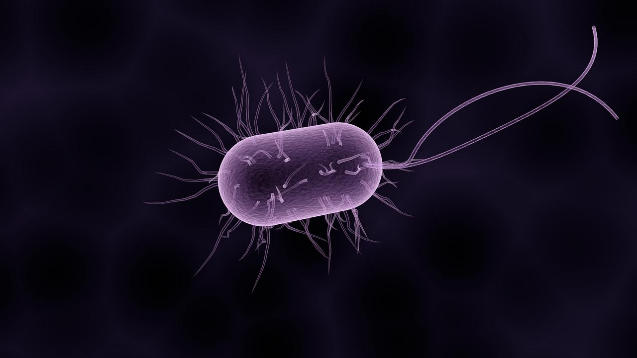 https://cdn.cnngreece.gr/media/news/2018/10/05/149536/photos/snapshot/bacteria-1832824_1280.png