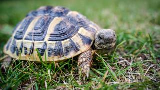 Ληστεία με λεία… 123 χελώνες στα νησιά Γκαλαπάγκος