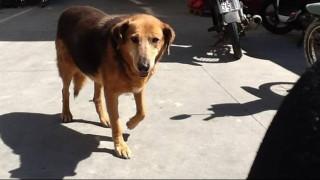 «Χάτσικο» της Κρήτης: Πέθανε το σκυλί που είχε συγκινήσει με την αφοσίωσή του