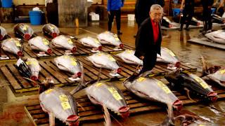 Τέλος εποχής για την μεγαλύτερη ψαραγορά του κόσμου - «Το Τόκιο χάνει ένα κομμάτι της ψυχής του»