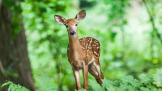 ΗΠΑ: Προειδοποίηση στους κυνηγούς για κρούσματα επικίνδυνης ασθένειας σε ελάφια