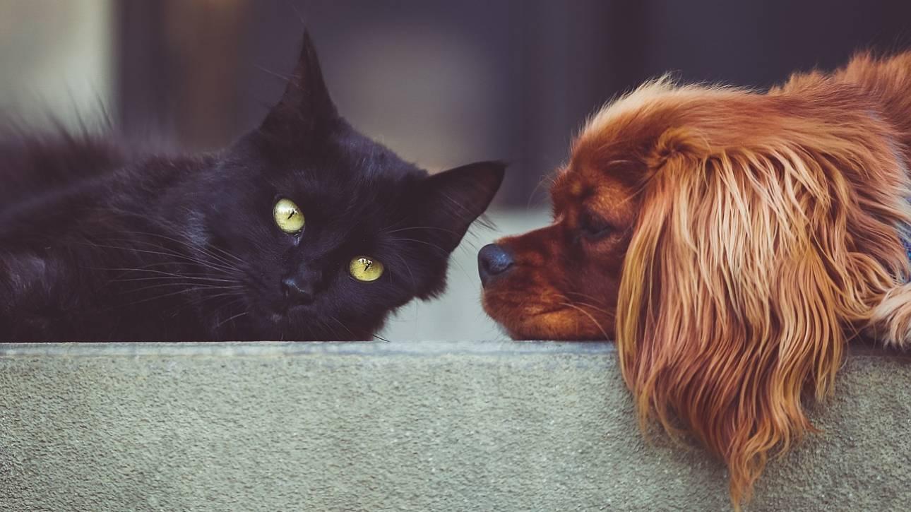 b02168862657 Νόμος για τα κατοικίδια ζώα  Ποιες οι υποχρεώσεις των ιδιοκτητών και ποια  τα πρόστιμα