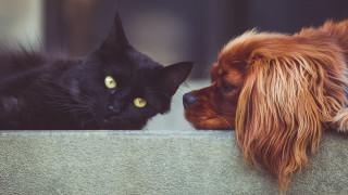 Νόμος για τα κατοικίδια ζώα: Ποιες οι υποχρεώσεις των ιδιοκτητών και ποια τα πρόστιμα