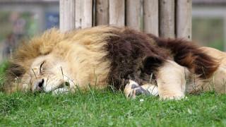 ΗΠΑ: Οργή για τον υπάλληλο τμήματος προστασίας άγριας ζωής που σκότωσε δεκάδες άγρια ζώα στην Αφρική