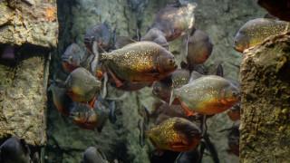 Εντοπίστηκε απολίθωμα ψαριού που τρομοκρατούσε τις θάλασσες της Ιουρασικής περιόδου