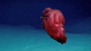 Παράξενο πλάσμα... «ταράζει» τα νερά της Ανταρκτικής