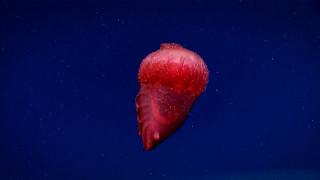 Το περίεργο πλάσμα που «ταράζει» τον Νότιο Ωκεανό