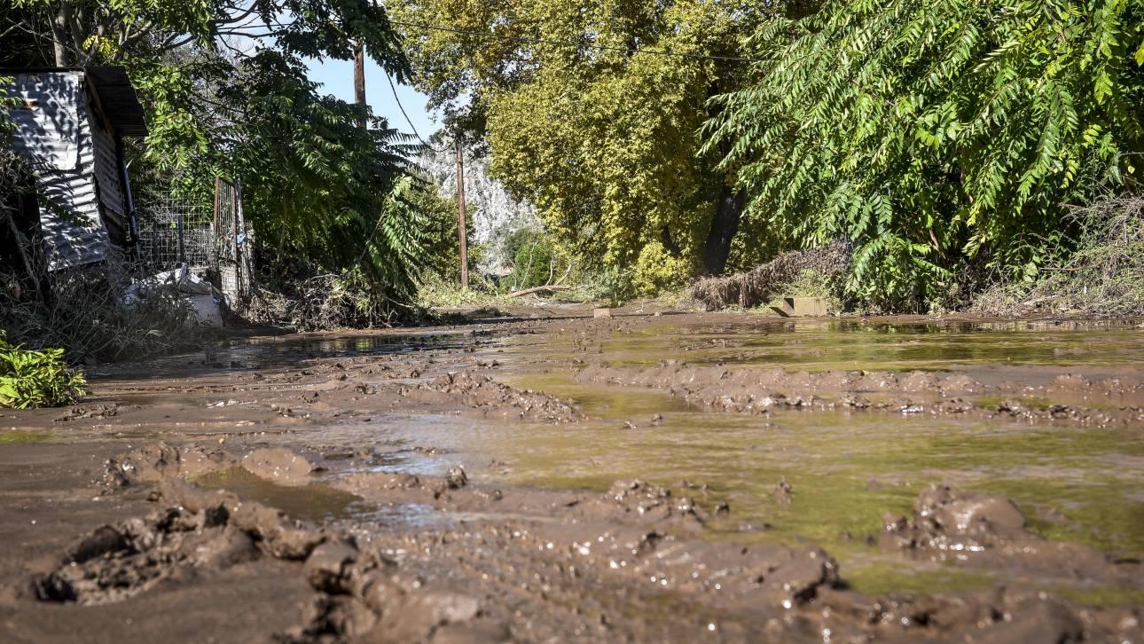Εύβοια: Εντοπίστηκε νεκρή γυναίκα κοντά στο Μαντούδι