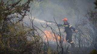 Ανεξέλεγχτη η φωτιά στη Σιθωνία Χαλκιδικής - Εκκενώνεται ο Κάμπος λόγω του καπνού