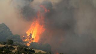Ολονύχτια μάχη με τις φλόγες στη Σιθωνία Χαλκιδικής