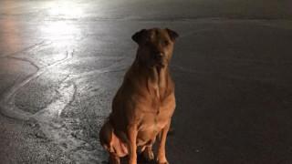 «Όσκαρ» πονηριάς: Σκυλίτσα προσποιείται ότι είναι αδέσποτη για να την… ταΐζουν