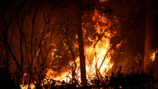 Φωτιά Μάτι: Η κατάθεση του ύποπτου εμπρηστή - Οι νέες αποκαλύψεις για την εθνική τραγωδία