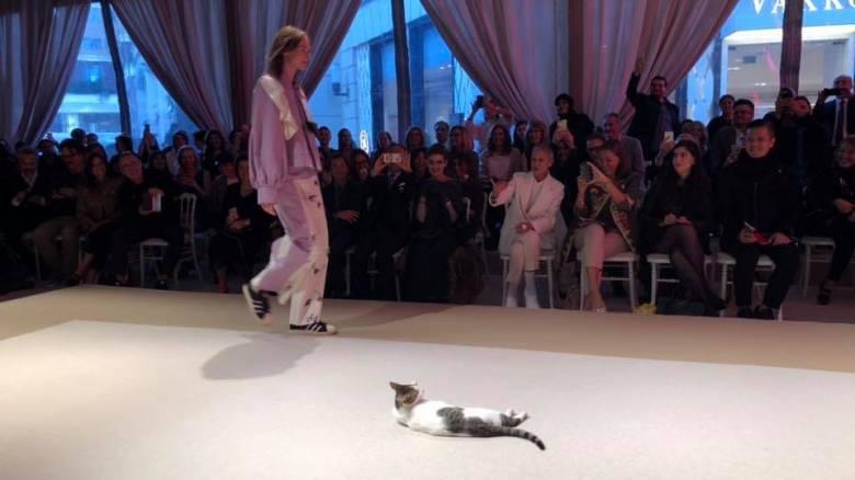 Γάτα «έκλεψε» την παράσταση σε επίδειξη μόδας