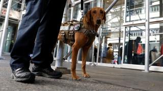 Εκτός από ναρκωτικά, οι σκύλοι μπορούν να «μυρίσουν» και την ελονοσία
