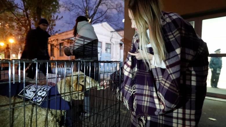 Κλουβιά με... πρόβατα άφησαν άγνωστοι έξω από τα γραφεία ρωσικής εφημερίδας