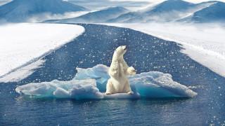 Δραματική προειδοποίηση από τη WWF: Αυτή είναι η τελευταία γενιά που μπορεί να σώσει τον πλανήτη