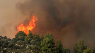 Επτά χιλιάδες στρέμματα κάηκαν από την πυρκαγιά στη Σάρτη