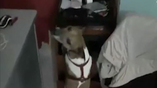 Pocho: Ο σκύλος που επικήρυξε η Μαφία