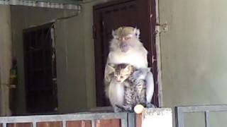Η «απαγωγή» μιας γάτας από μαϊμού και η απρόσμενη εξέλιξη