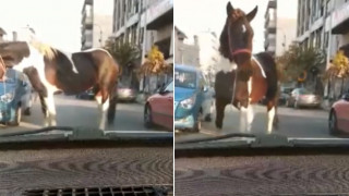 Βίντεο: Άλογο κάνει... βόλτα στο κέντρο της Θεσσαλονίκης