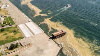 Καθηγήτρια βιολογίας ΑΠΘ: Το φαινόμενο ερυθράς παλίρροιας στον Θερμαϊκό θα επανεμφανιστεί
