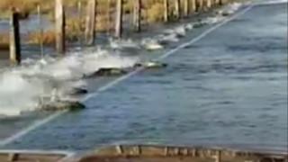 Γιατί σολομοί κολυμπούν σε… δρόμο της Ουάσινγκτον;