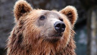 Ρωσία: 15χρονος σκοτώθηκε από αρκούδα για να σώσει τον ξάδελφό του